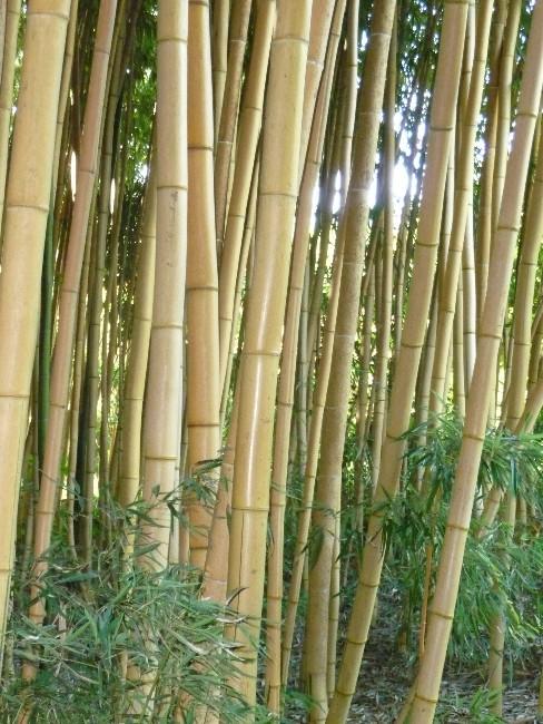 Bamboe Kleding online