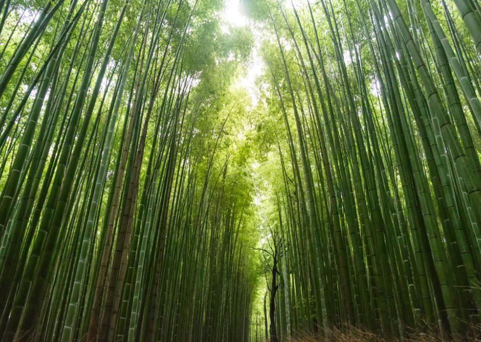 kleding bamboo